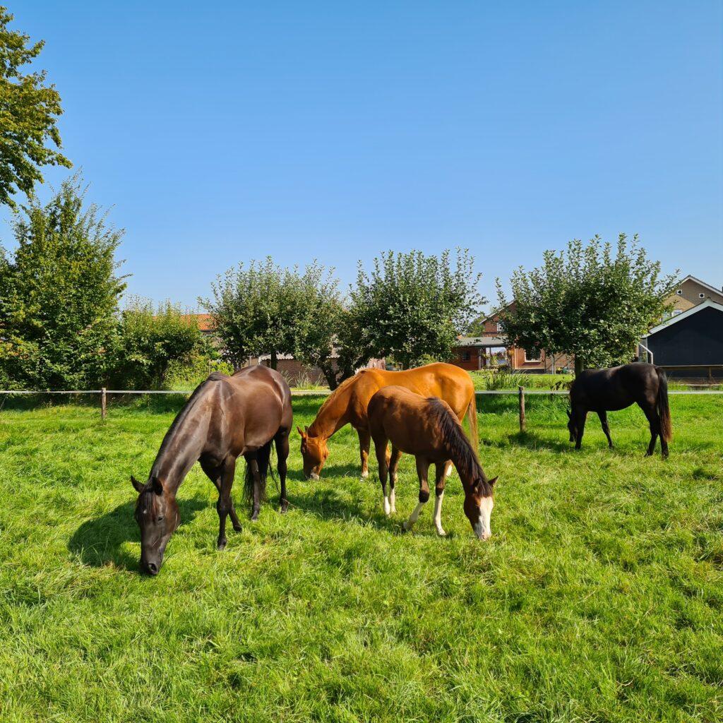 Begeleiding van kinderen met paarden